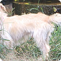 Adopt A Pet :: Murray - Norwalk, CT
