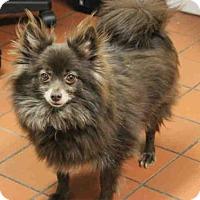 Adopt A Pet :: LUCY - Wainscott, NY