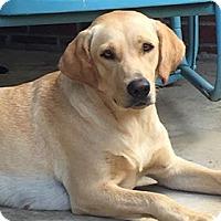 Adopt A Pet :: Hallie - Huntsville, AL