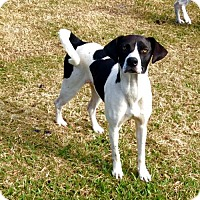 Adopt A Pet :: Chica - New Smyrna beach, FL