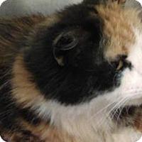 Adopt A Pet :: Amber - Parma, OH