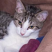 Adopt A Pet :: Gus - Elmwood Park, NJ