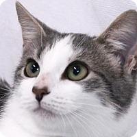 Adopt A Pet :: Easter - Murfreesboro, NC