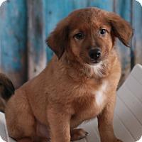 Adopt A Pet :: MJ - Brattleboro, VT