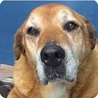 Adopt A Pet :: Penny - Springdale, AR