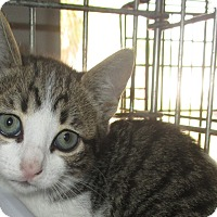 Adopt A Pet :: Sassafras - New Smyrna Beach, FL