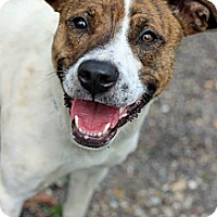 Adopt A Pet :: Nala - Tinton Falls, NJ