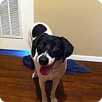 Adopt A Pet :: Magnolia - Richmond, VA