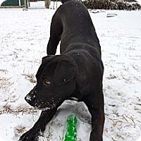 Adopt A Pet :: Finn - Hixson, TN
