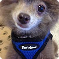 Adopt A Pet :: Janie - Gilbert, AZ