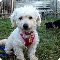 Adopt A Pet :: Lottie Moon - Austin, TX