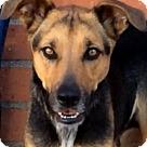 Adopt A Pet :: JUNE (video)