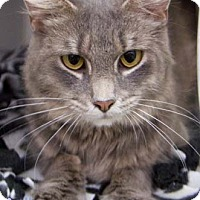 Adopt A Pet :: Abagale - Merrifield, VA