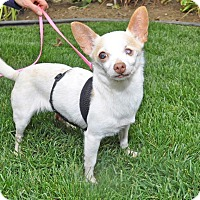 Adopt A Pet :: Emma - Burbank, CA