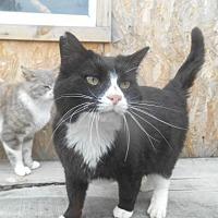Adopt A Pet :: tux - Zaleski, OH