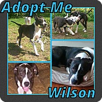 Adopt A Pet :: Wilson - Cheney, KS