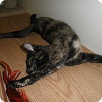 Adopt A Pet :: Posey - Milwaukee, WI