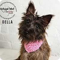 Adopt A Pet :: Della-Pending Adoption - Omaha, NE