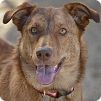 Adopt A Pet :: Izzy - Meridian, ID