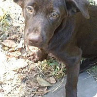 Adopt A Pet :: Denver-pending adoption - East Hartford, CT