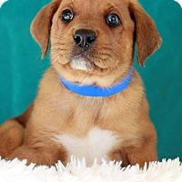 Adopt A Pet :: Titan - Waldorf, MD