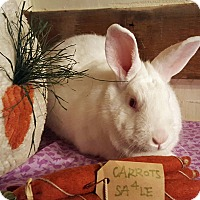 Adopt A Pet :: Princess Puff (Puffie) - Alexandria, VA