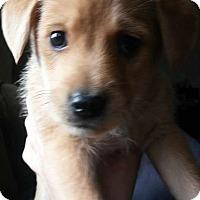 Adopt A Pet :: Emmy - Thousand Oaks, CA