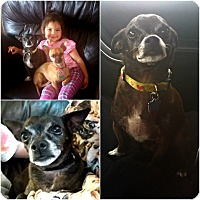 Adopt A Pet :: Siegel - Alamosa, CO