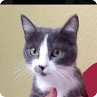 Adopt A Pet :: ROXY - Red Bluff, CA