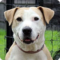Adopt A Pet :: Tilly - Harrison, NY