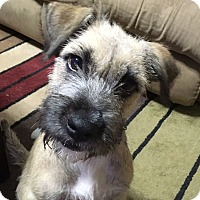Adopt A Pet :: Nellie - Huntsville, AL