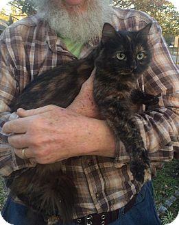 Domestic Mediumhair Cat for adoption in Slidell, Louisiana - Sasha
