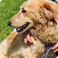 Adopt A Pet :: Olivia (and Ziva) - New Canaan, CT