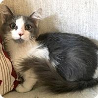 Adopt A Pet :: Eugenia - Addison, IL
