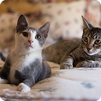Adopt A Pet :: Marco and Molly - Staten Island, NY