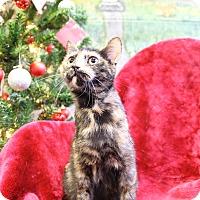 Adopt A Pet :: Ariana - Greensboro, NC
