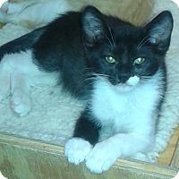 Adopt A Pet :: Derreck - Whittier, CA