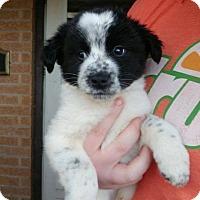 Adopt A Pet :: Blinky - Wichita Falls, TX