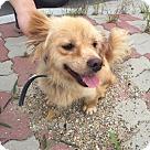 Adopt A Pet :: Goldie