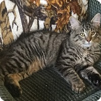 Adopt A Pet :: Crick - Ypsilanti, MI