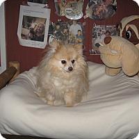 Adopt A Pet :: COZY - Port Clinton, OH