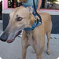 Adopt A Pet :: Milo - Fremont, OH