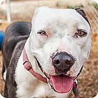 Adopt A Pet :: Hayden - Phoenix, AZ
