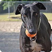 Adopt A Pet :: Nicolas (D's Green Back) - Chagrin Falls, OH