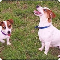 Adopt A Pet :: LOLA & RILEY - Phoenix, AZ