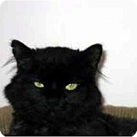 Adopt A Pet :: Jett - Medway, MA