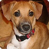 Adopt A Pet :: Tyler - San Ysidro, CA