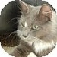 Adopt A Pet :: Santo - Vancouver, BC