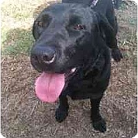 Adopt A Pet :: ROSIE - La Mesa, CA