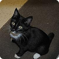 Adopt A Pet :: Selena - Miami, FL